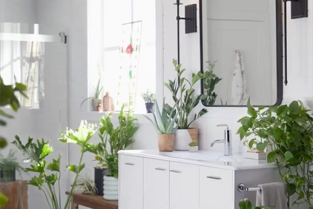 Plants on bathroom sink with light shining through window