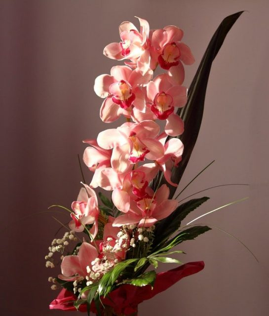 Pink Moth Orchids with green leaves