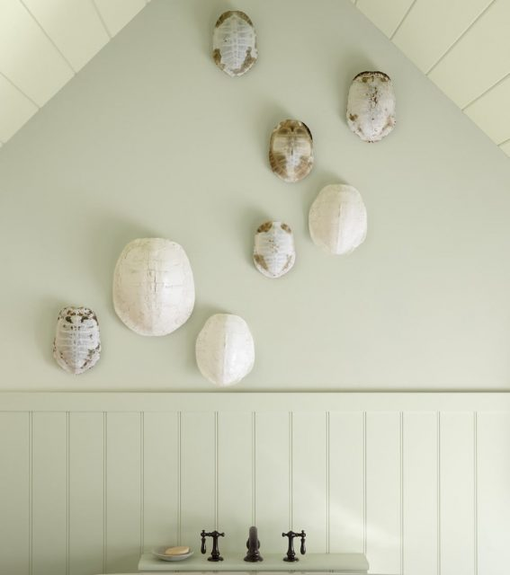 turtle shells hung on pale green bathroom wall